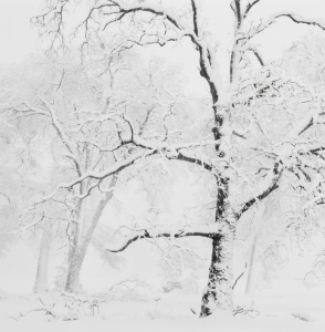 Trees in Snowstorm, Yosemite Valley, CA, 2011 Photo by Anne Larsen