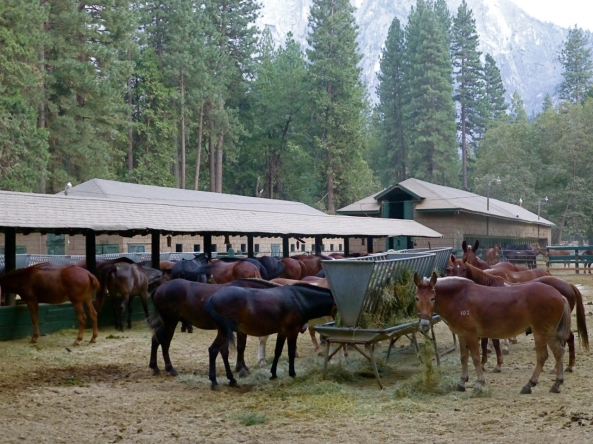 stables_horses