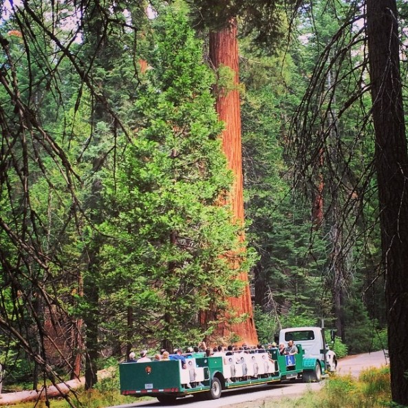 Big Trees Tram Tour in Yosemite